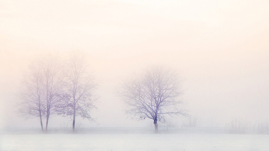 Image: Trees in Winter. Physis Wellness